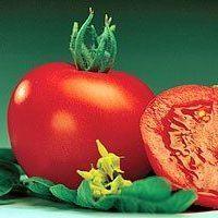 Каталог Маунтин Спринг F1 семена томата детерминантного (Syngenta / Сингента) маунтин_спринг_F1_семена_овощей_оптом.jpg