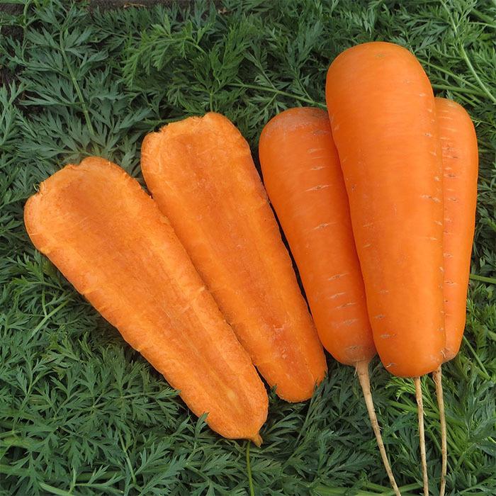 Курода/Шантане Боливар F1 семена моркови курода/шантане (Clause / Клос) боливар_1.jpg