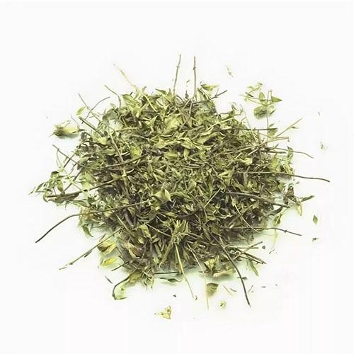 Травы Зизифора ziziphora-38.jpg