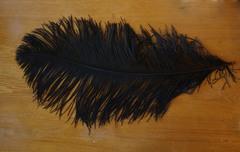 Перья страуса  декоративные  ПРЕМИУМ 70-75 см. (цена за 1 шт.) , (выберите цвет)