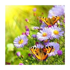 луг-ромашки-бабочки-алмазная-мозаика