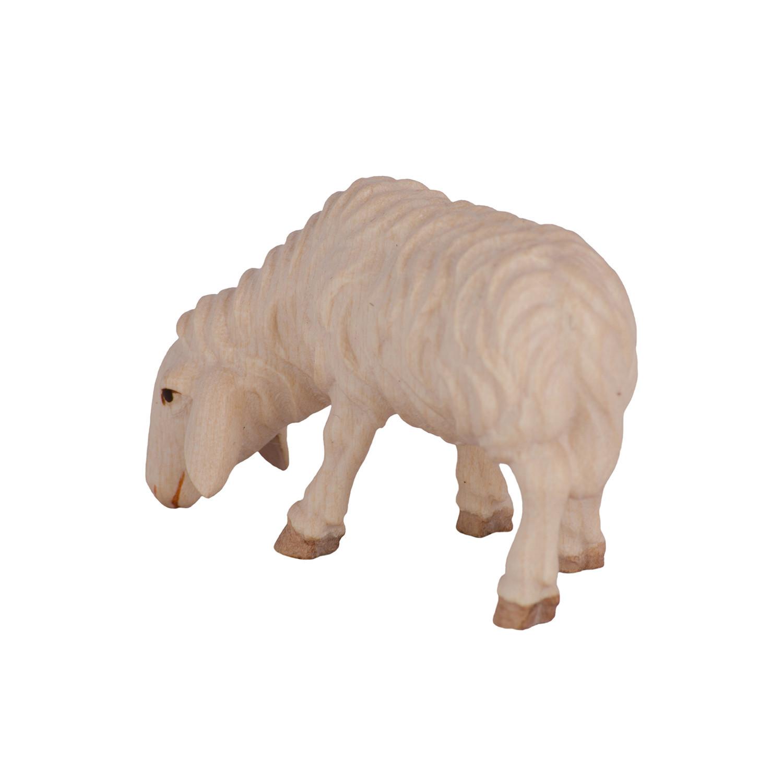 Овца на выпасе