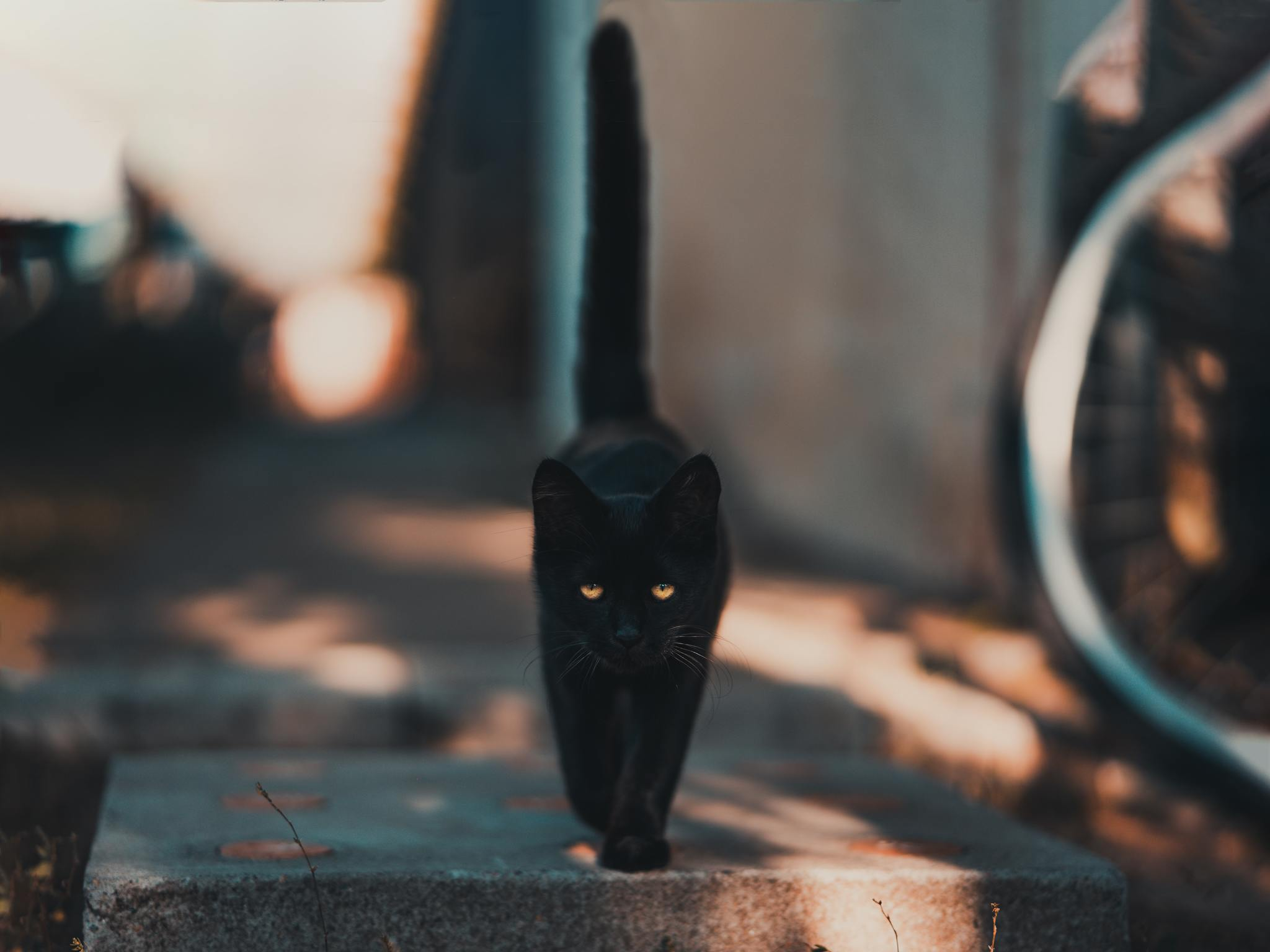 Eres la persona supersticiosa? фото