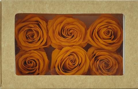 Стабилизированный Бутон Розы Optimum Flowers Standart . Цвет Оранжевый (Диаметр 7см)