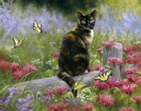 Картина раскраска по номерам 50x65 Кот на заборе