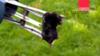 Ловушка для кротов Mole Trap от SWISSINNO