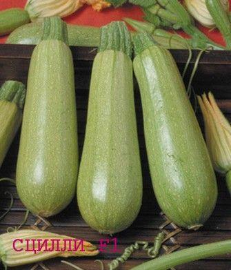 Кабачок Сцилли F1 семена кабачка (Seminis / Семинис) Сцилли_F1__Scillly_F1__семена_овощей_оптом.jpg