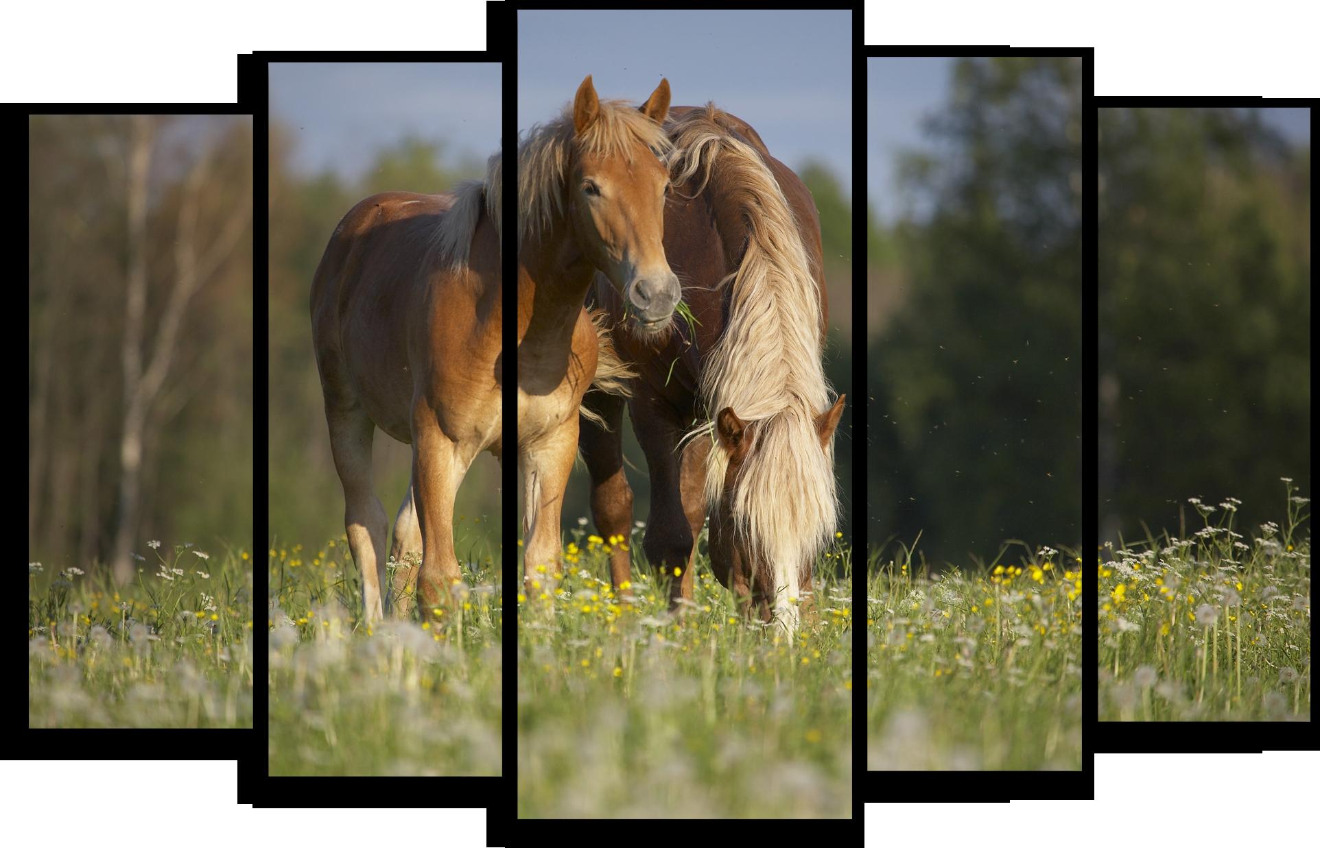 """Животные Модульная картина """"Игривые лошади"""" М429.png"""