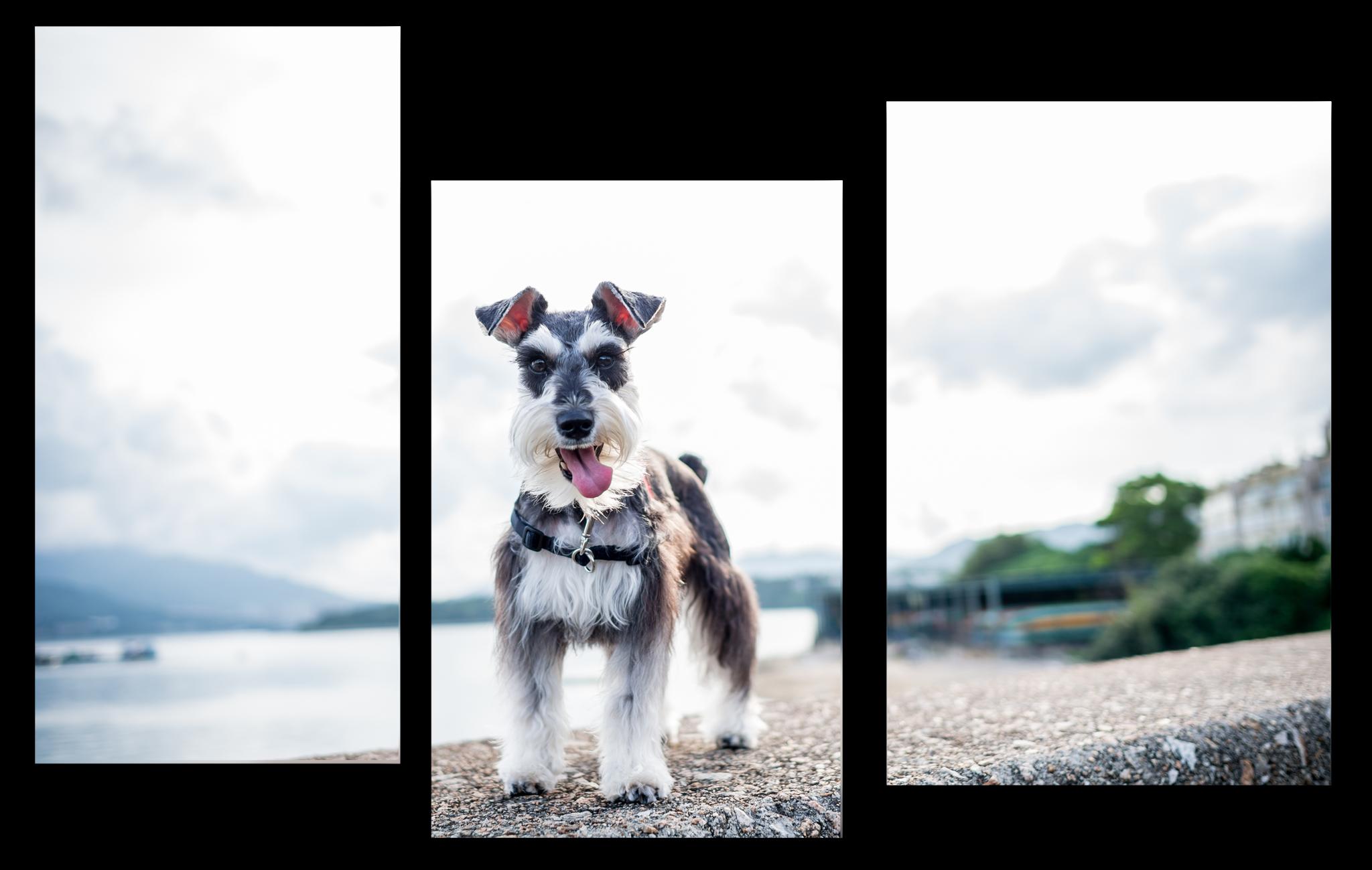 """Животные Модульная картина """"Взгляд собаки"""" М1065_M_загибы_90х60.png"""