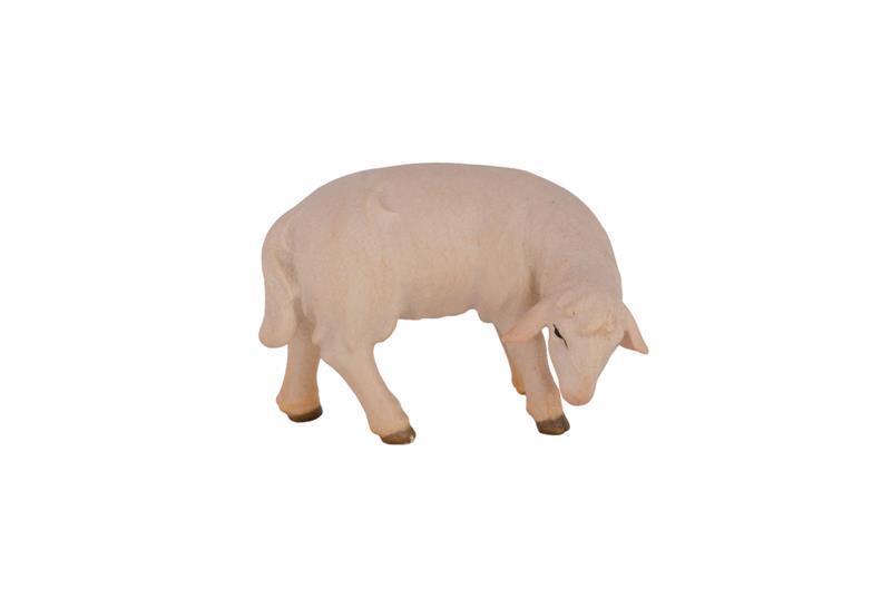 Овца пасется