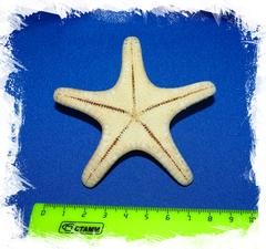 Натуральная морская звезда
