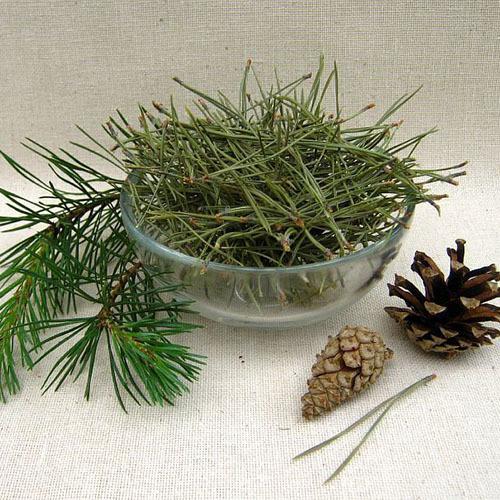 Травы Сосны хвоя pinus-needles-58.jpg