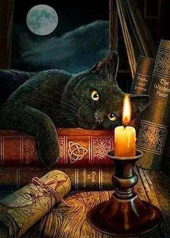Алмазная Мозаика 40x50 Черный кот лежит на книгах (арт. TCH8265 )
