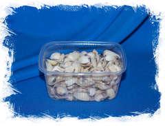 Морские ракушки для поделок Венерулис клам