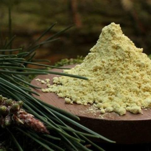 Сосны пыльца