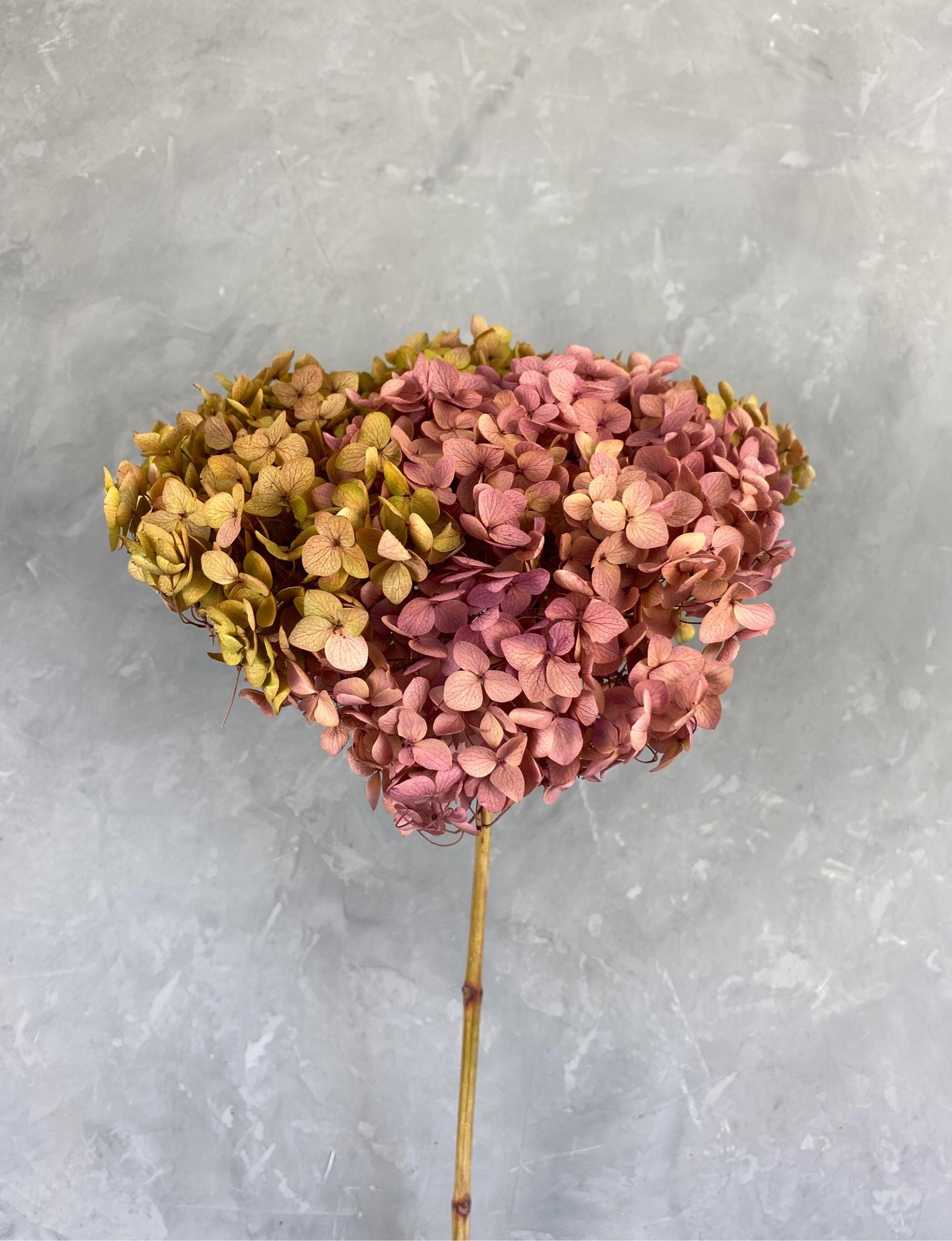 Гортензия на ветке розово-коричневая