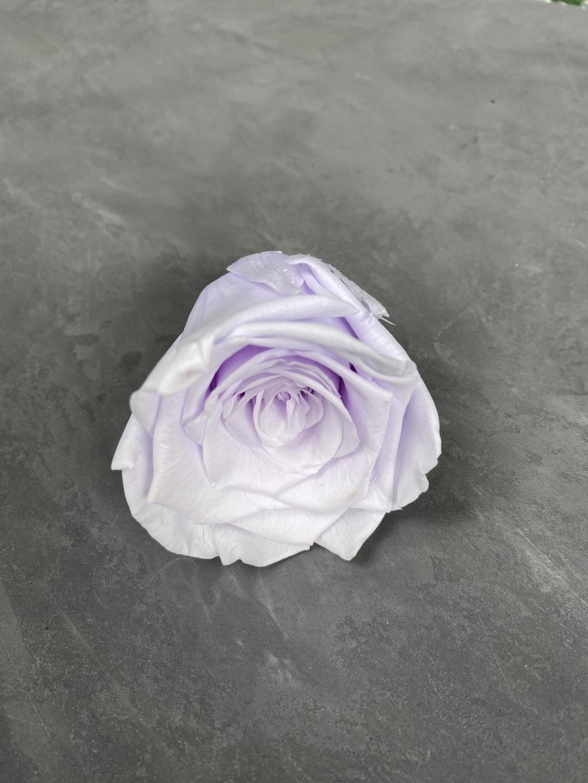 Роза классическая бело-фиолетовая d=5,5 см