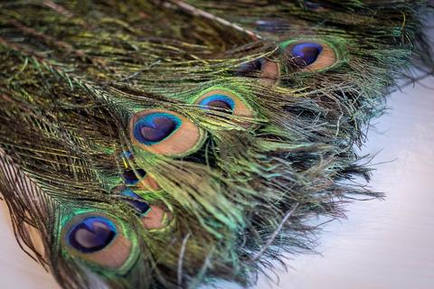 Перья павлина  декоративные ,  01 натуральный (длина 40-100 см.)цена за 10 штук.