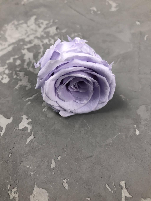 Роза классическая светло-фиолетовая d=3,5-4 см
