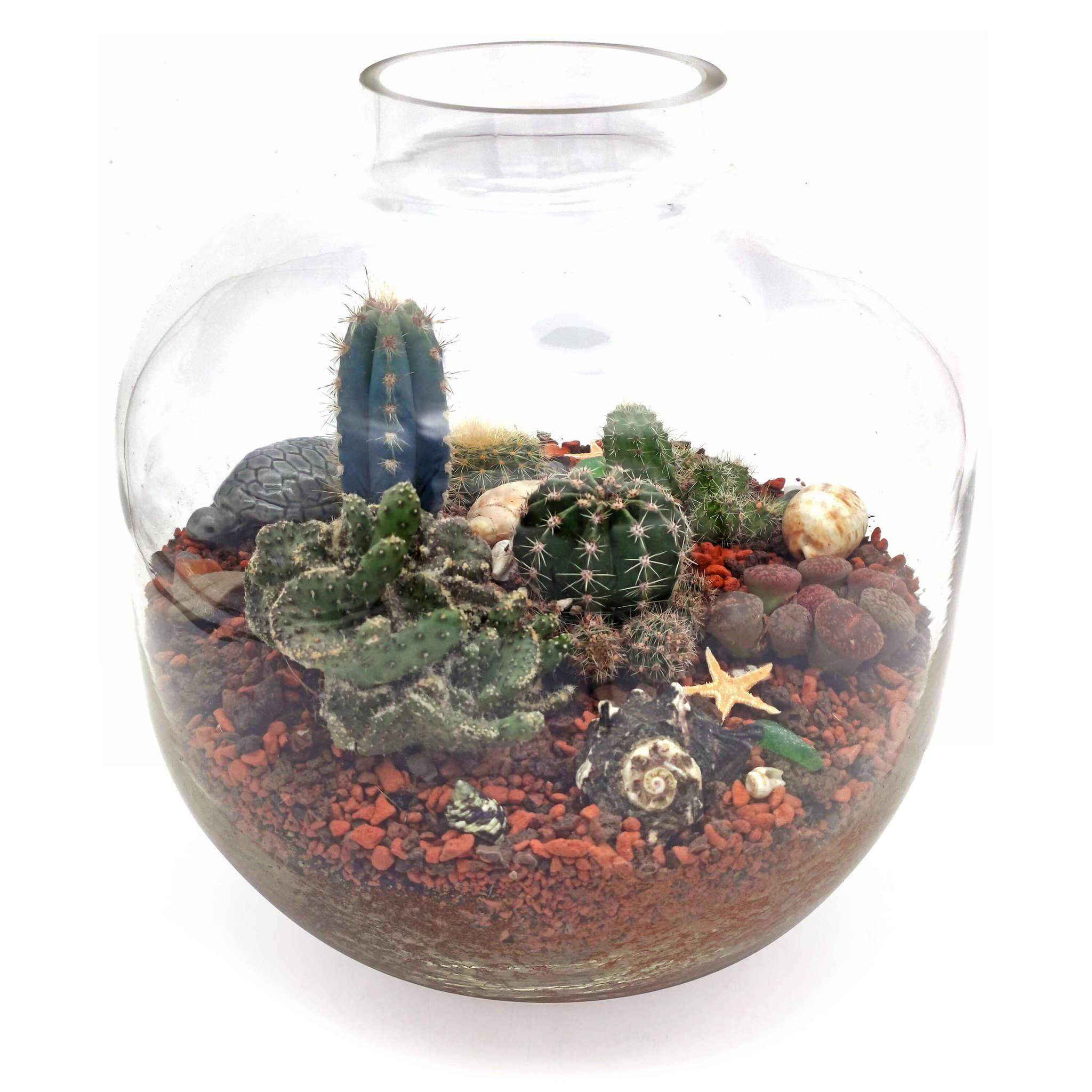 Композиция с живыми кактусами в стекле - Чарские Пески