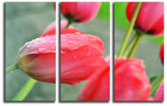 "Модульная картина ""Розовые тюльпаны"""