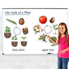 LER6045 Развивающая игрушка Жизненный цикл растений (магнитный) Learning Resources