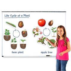 Набор магнитов Жизненный цикл растений Learning Resources
