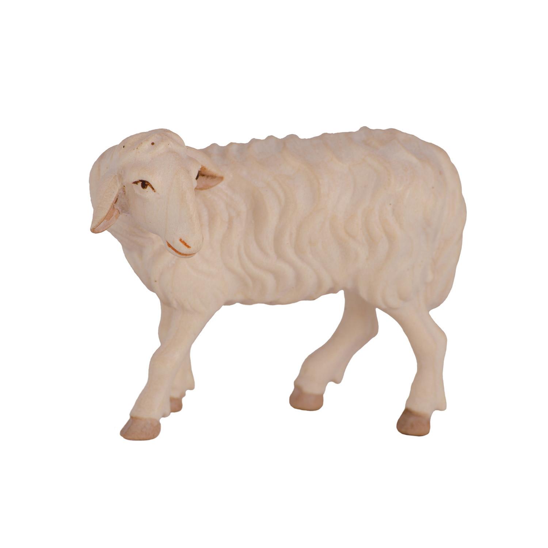 Овца взрослая