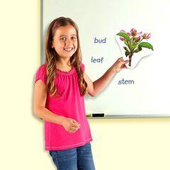 Магнитная игра Жизненный цикл растений Learning Resources
