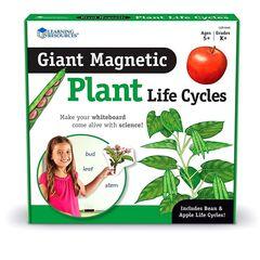 Демонстрационный материал Жизненный цикл растений Learning Resources
