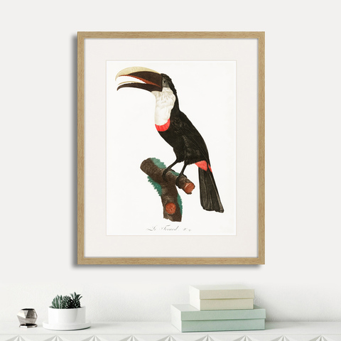 Франсуа Левальян - Beautiful toucans №2, 1806г.