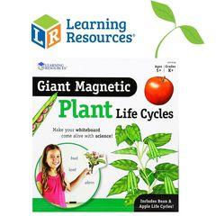 Жизненный цикл растений Learning Resources набор магнитов для доски