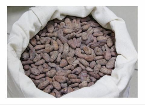 Какао бобы Сорт Mexico el Vado