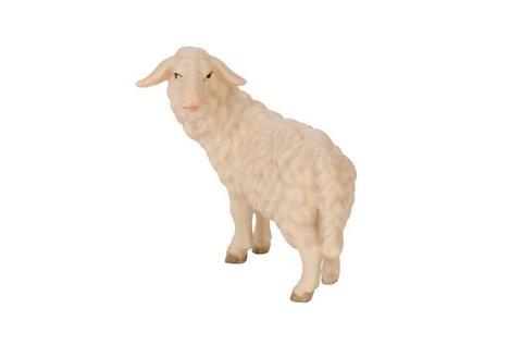 Овца вполоборота