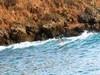 Осенний серф-лагерь в Мексике с йогой и китами