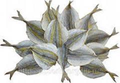 Желтый полосатик (Астраханка)