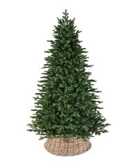 Triumph tree ель Шервуд Премиум стройная 1,55 м