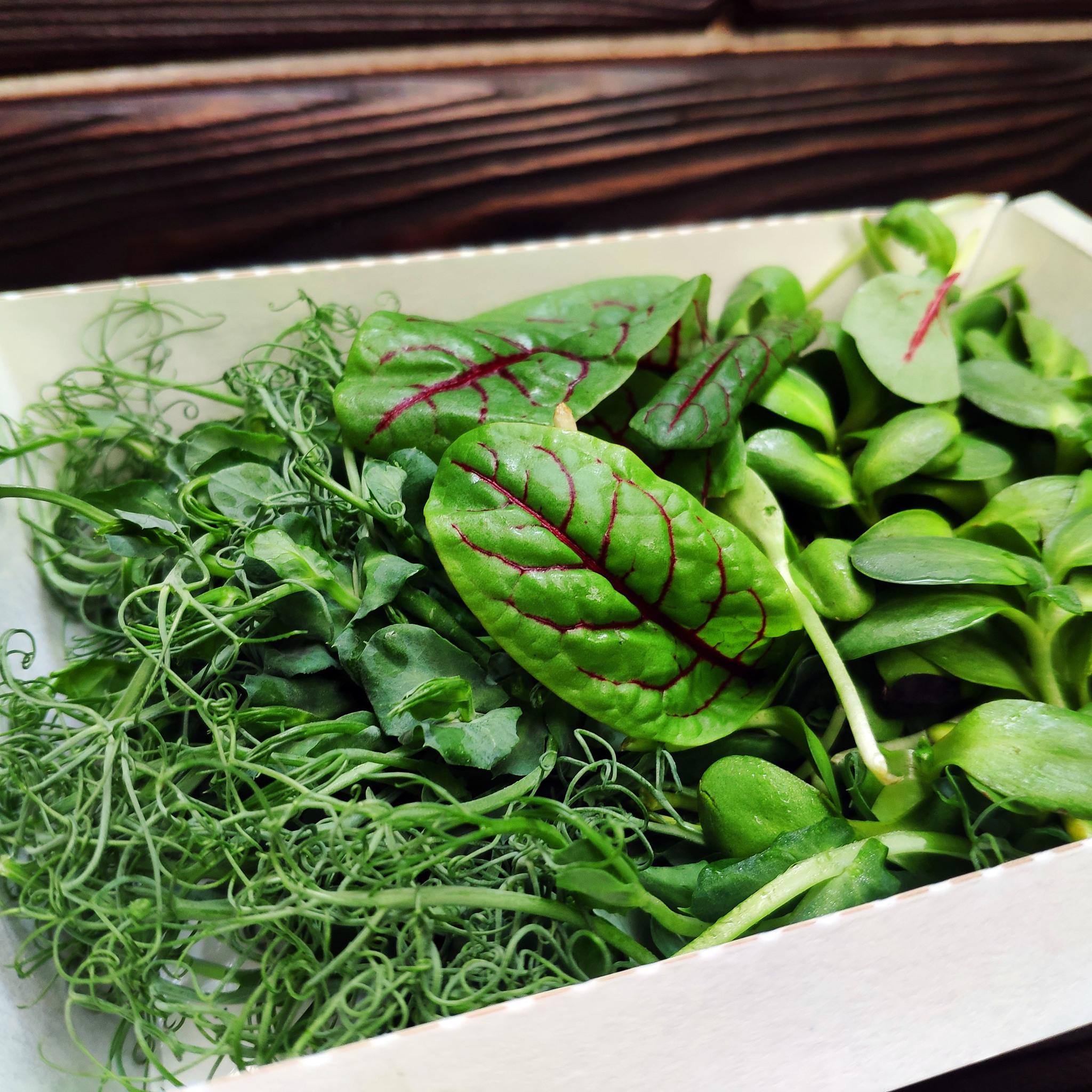 Фотография Микс из микрозелени (срез, лоток) / 70-75 гр купить в магазине Афлора