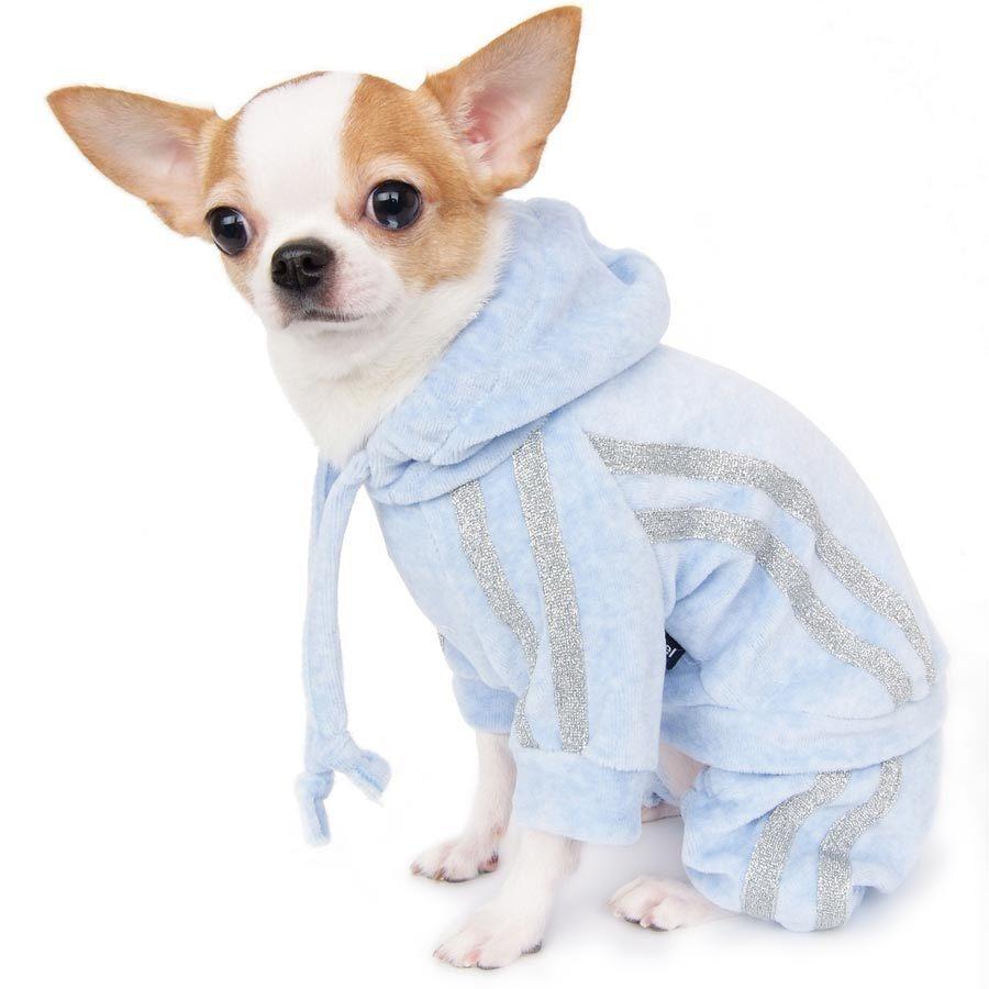 костюмы для щенка чихуахуа