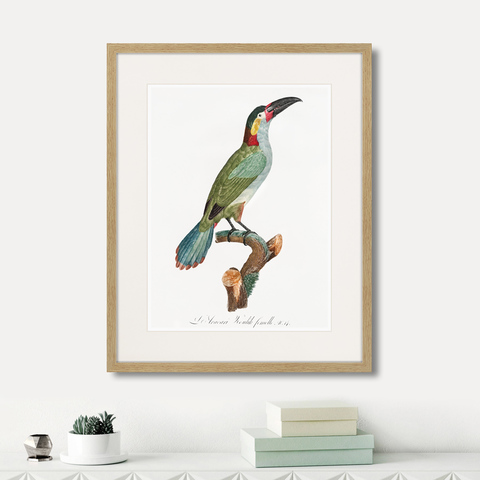 Франсуа Левальян - Beautiful toucans №3, 1806г.