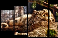 """Модульная картина """"Спокойный леопард"""""""