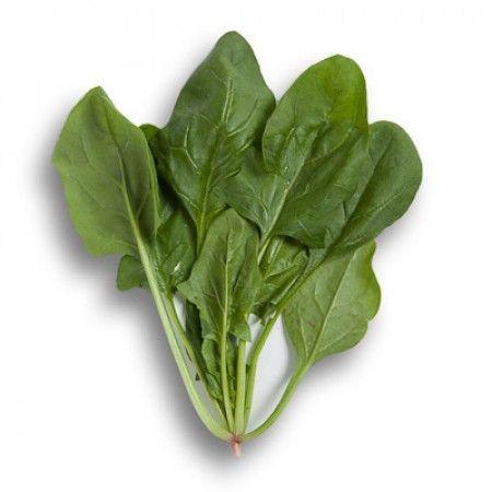 Шпинат Боа F1 семена шпината (Rijk Zwaan / Райк Цваан) БОА_F1_семена_овощей_оптом.jpg