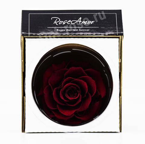 Стабилизированный Бутон Розы Кинг Rose Amor(Эквадор)Bonita Цвет Бордовый (10-12см)