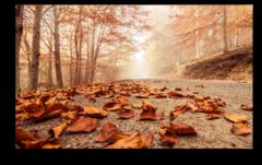 """Постер """"Осенние листья"""""""