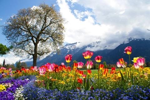 Алмазная Мозаика 30x40 Вид на горы с цветочного поля (арт. GB70453)