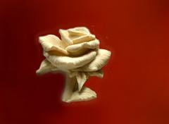Силиконовый молд № 2083 Роза большая