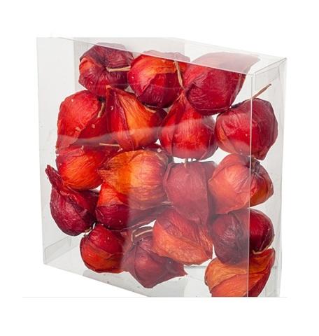 Набор физалиса искусственного 18шт., D3,5х4см, цвет: темно-красный