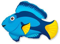 F Голубая рыбка, 34