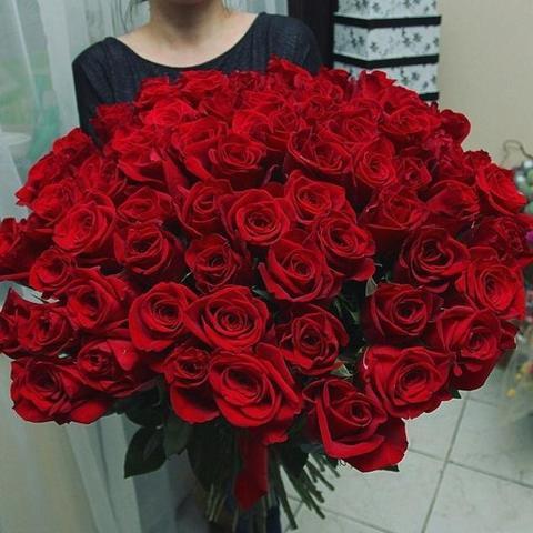 101 красная эквадорская роза 60 см #1461