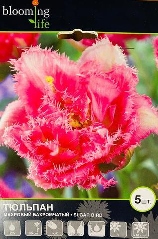 Луковичные Тюльпан махровый Шуга Бёрд, 5 шт